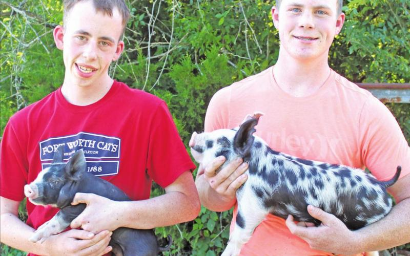 Brothers work together on show swine projects