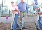 Coufal siblings get competitive with livestock